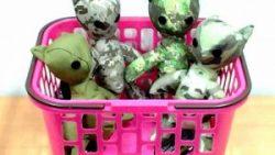 画像:投稿「AVANTE×猫奉行コラボアイテム MOLLE対応 猫 入荷しました♡」のサムネイル画像